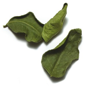 kaffir-lime-leaves-300x300