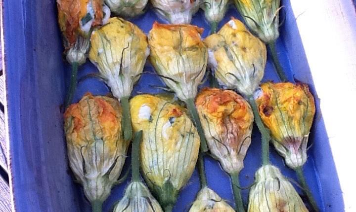 Fleurs de courgette farcies